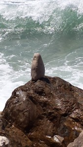 Chouette pierre